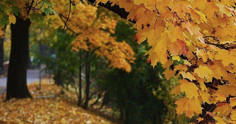 Höstens städdagar 20 + 21 oktober