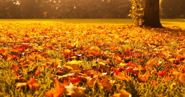 Höstens städhelg
