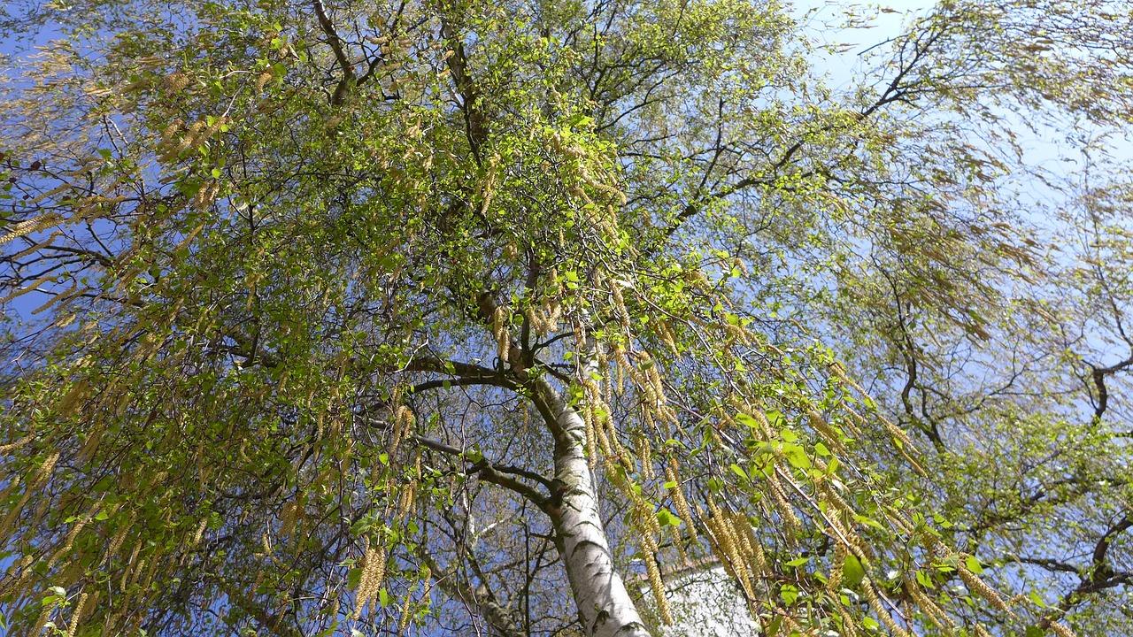 Järna Trädvård utför arbete